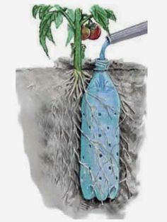 http://homestead-and-survival.com/how-to-make-a-soda-bottle-drip-feeder-for-vegetables/