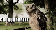 Sassy owl is sassy.