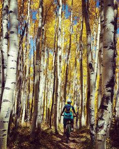 The Gunnison National Forest in Colorado is home to some of the best mountain bike trails in the world, including Trail 401, Doctor Park, and Mt. Crested Butte.