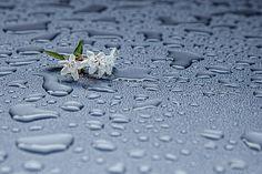 Σταγόνες Βροχής, Υγρασία, Αφηρημένη