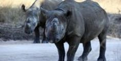 Global wildlife populations down by half since 1970 - WWF
