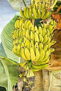 """Bananas"" by British artist Lucian Freud Oil on canvas Lucian Freud, Tree Illustration, Botanical Illustration, Illustrations, Figure Painting, Painting & Drawing, Painting Banana, Art Du Monde, Banana Art"