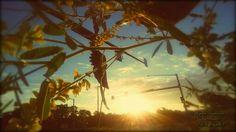 Des Moines, Iowa Sunrise