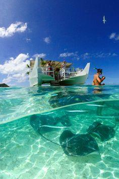 Feeding stingrays in Bora Bora!   www.pgcruises.com