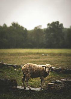 """nordravn: """" wet wool by Jen MacNeill on Flickr. """""""