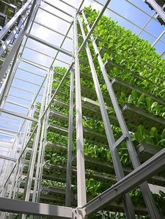 Sky Greens is world's first low carbon, hydraulic driven vertical farm
