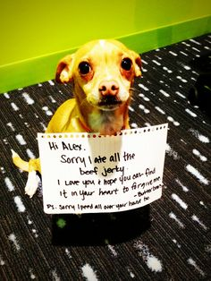 Dogshaming, Love his name, Butterbean :)