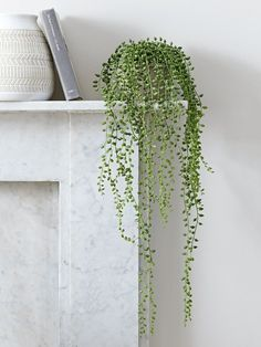 NEW Faux Potted String of Pearls - Faux Flowers & Plants - Decorative Home Accessories - Luxury Homeware home accessories Artificial Flowers And Plants, Artificial Flower Arrangements, Hanging Plants, Indoor Plants, Home Decor Accessories, Decorative Accessories, Decoration Plante, Home Decoration, Minimalist Decor