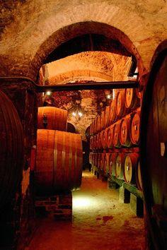 Wine Cellar | perfect for my dream vineyard