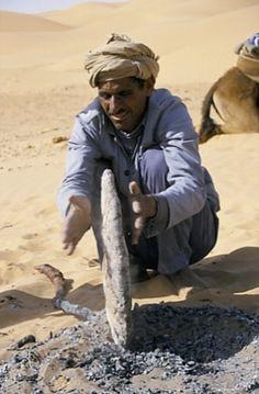 Chamelier en #Tunisie