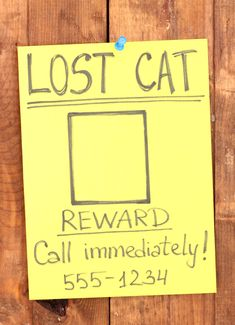 13 Tips for What to Do When Your Cat Goes Missing