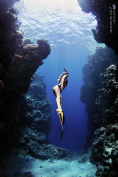 Scuba diving in the Indian Ocean. Underwater Photos, Underwater World, Underwater Photography, Underwater Caves, Photo Bleu, Scuba Girl, Deep Blue Sea, Ocean Life, Marine Life