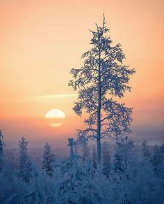 Good Morning Thursday, Stand Tall, Winter Wonderland, Sunset, Nature, Outdoor, Lapland Finland, Beautiful, Instagram