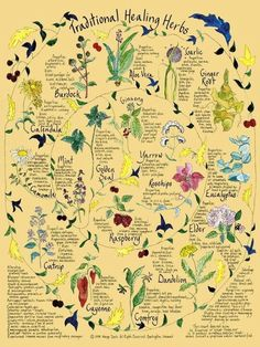 kitchens, plant, charts, frames, heal herb, gardens, herbs garden, tradit heal, posters