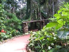 The site features over 1,000 varieties of rare exotic and tropical plants, including many types of ferns, fig trees, orchids, hibiscus, and other flowering plants. Other notable trees include a 100-year-old coco plum, a pond apple and a sausage tree. An open grassy meadow, with diverse plantings around its perimeter, is situated near the center of the site. A succulent garden, which was developed in the 1960s, is located south of Swan Lake.  #pinecrest #miami Succulents Garden, Planting Flowers, Flowering Plants, Pinecrest Gardens, Types Of Ferns, Fig Tree, Garden Photos, Tropical Plants, Garden Bridge