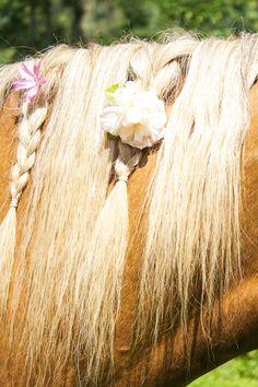 Equestrian Photo Shoot   Horses & Heels