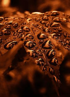 Copper water droplets By Reindeer Color Cobre, Copper Color, Copper Penny, Water Drops, Rain Drops, 4k Photography, Magical Photography, Levitation Photography, Experimental Photography