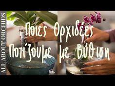 Ποιες ορχιδέες ποτίζουμε με βύθιση. - YouTube Houseplants, Orchids, Gardens, Artwork, Nature, Flowers, Youtube, Work Of Art, Naturaleza