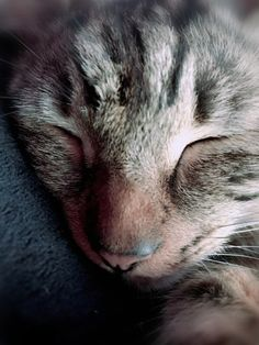 Cute sleepy tabby. All Types Of Cats, Maine Coon, True Love, Tabby Cats, Kitty, Pictures, Animals, Kitty Cats, Real Love
