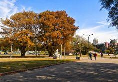 """""""Ida y Vuelta"""" Tomada en la Plaza del Brasil, Recoleta, Buenos Aires. #Fotografías,#Photos,#Fotos,#BuenosAires,#PaisajeUrbano,#árboles"""