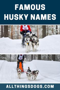 The best Siberian Husky names are undoubtedly the most popular, as there must be a good reason why so many Husky owners love these names! Whatever type of dog you have, check out these brilliant and famous Husky names for ideas!  #famoushuskynames #huskynames #siberianhuskynames