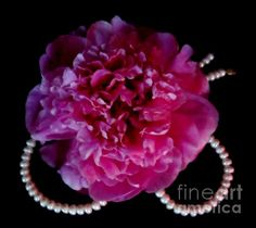 'Peonies and Pearls' Fine Art Photography by Margaret Newcomb - Photography and digital art of a single peony flower sitting atop a pearl necklace shaped like an upside down heart. The peony is soft muted shades of pink, ivory pearls on a solid black background. This is 1 in a series of the Peony/Peal collection.Visit my Fine Art Store to purchase Prints: http://margaret-newcomb.artistwebsites.com/art/all/all/framed+prints
