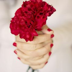Red flowers to finish a red month by Isabel Pavía, via Flickr