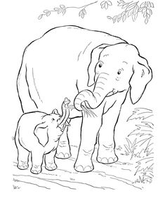 Baby Elephant coloring page   Elephant Coloring page