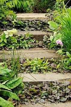 Stock Photo - Garden Railway sleeper steps planted with ground cover plants Hillside Garden, Sloped Garden, Terrace Garden, Gravel Garden, Garden Border Edging, Garden Borders, Garden Steps, Garden Paths, Sleeper Steps