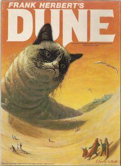 Grumpy Dune Cat