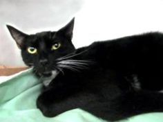 NEW PHOTO!!  Meet Nimo! Only 1yo, Adorable, Already Spayed... Ready to Go! At BACC