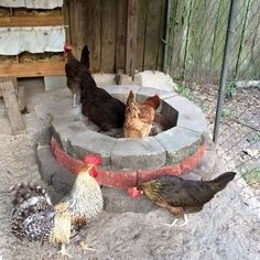 """Discover How To Easily Build An Attractive And Affordable Backyard Chicken Coop."" Building your own chicken coop will be one of the best decisions you'll Diy Chicken Coop Plans, Backyard Chicken Coops, Building A Chicken Coop, Chicken Ideas, Types Of Chickens, Raising Backyard Chickens, Keeping Chickens, Chicken Coup, Chicken Runs"
