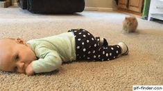 Kitten Steals Baby's Sock