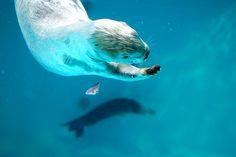 猟虎 sea  otter
