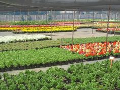 You need some plants Nurseries, Plants, Babies Rooms, Child Room, Plant, Babies Nursery, Kids Rooms, Planets, Baby Rooms