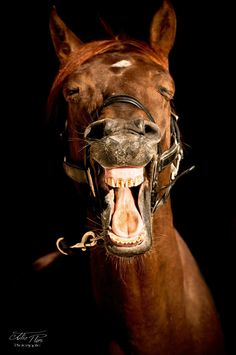#foto haha... lachendes Pferd