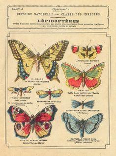 cahier lépidoptères by pilllpat Vintage Prints, Vintage Posters, Vintage Art, Antique Prints, Illustration Botanique, Botanical Illustration, Butterfly Illustration, Vintage Butterfly, Butterfly Art