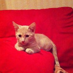My little Väinö cat
