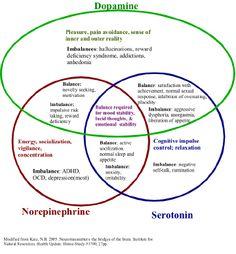 dopamine serotonin norepinephrine | decrease in the level of serotonin,norepinephrine, and dopamine ...