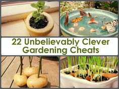 22 Unbelievably Clever Gardening Cheats -