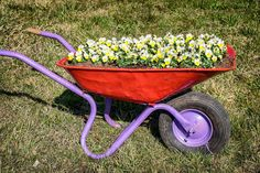 Bright red and purple painted wheelbarrow planter with black tire.