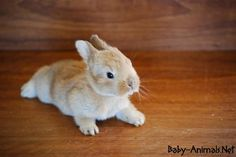 Baby rabbit images