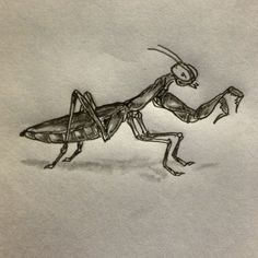 Praying mantis tattoo sketch by - Ranz