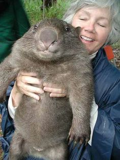 WOMBAT - Impossible to look at this fella without smiling!