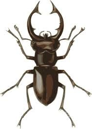 Image result for staghorn beetle tattoo