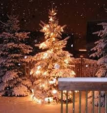 Image result for snowy trees tumblr