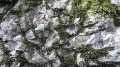 Texture of a rock with some moss