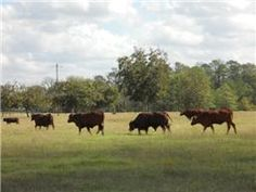 Pinned on swpre.com http://search.swpre.com/i/houston-farms-and-ranches-for-sale-750k-1m-houston-tx-farm-ranch-real-estate-swp Houston Farms and Ranches For Sale 0K-M-Houston,TX Farm/Ranch Real Estate-s