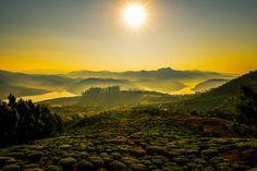Sunrise over the tea plantation in the Nilgiris, India. by Amit José Overton