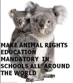 I am a huge animal rights activist, spreading awareness of the importance of adopting, not breeding, anti-cruelty, etc.